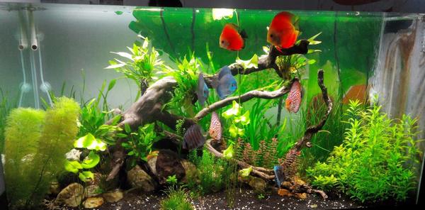 Dùng bể cá thủy sinh trang trí có thể xua tan đi nỗi lo về lăng quăng và muỗi