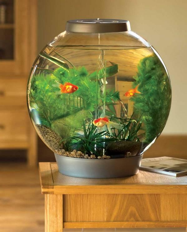 Nhiều người hướng dẫn cách nuôi cá cảnh cho rằng bể tròn là tốt nhất.