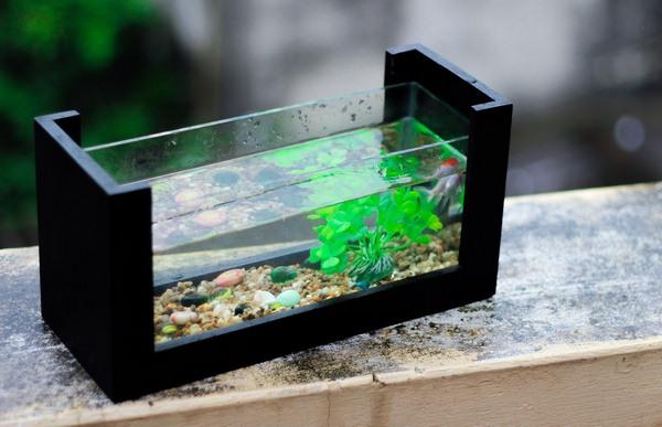 Thẻ alt của ảnh là: Cá nuôi trong hồ cá để bàn có kích thước nhỏ, số lượng vừa phải.