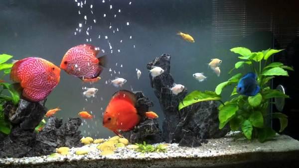 Thẻ alt của ảnh là: Hồ cá để bàn có kích thước nhỏ hơn so với bể cá trong nhà