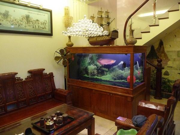 Sản phẩm của dịch vụ thi công hồ cá nghệ thuật Hoàng Hà
