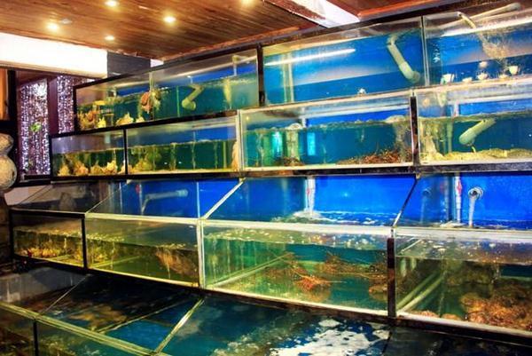 Mẫu hồ hải sản thông dụng