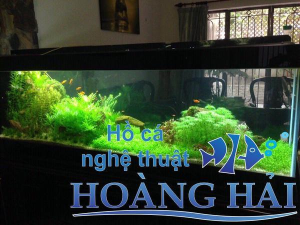 Hồ thủy sinh mang thiên nhiên đến ngôi nhà bạn