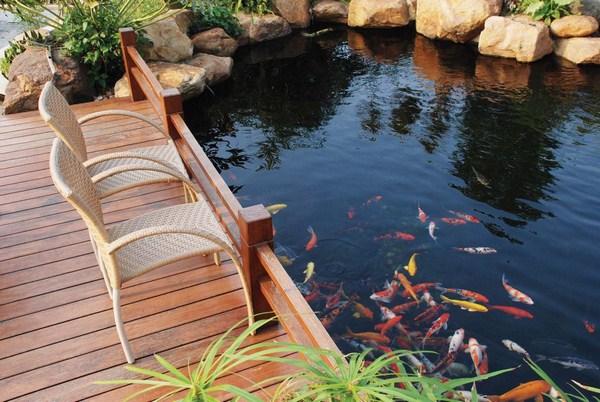 Hồ cá tạo nên cảnh sắc cho không gian xung quanh.