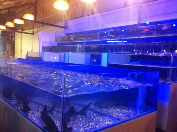 Hồ cá hải sản