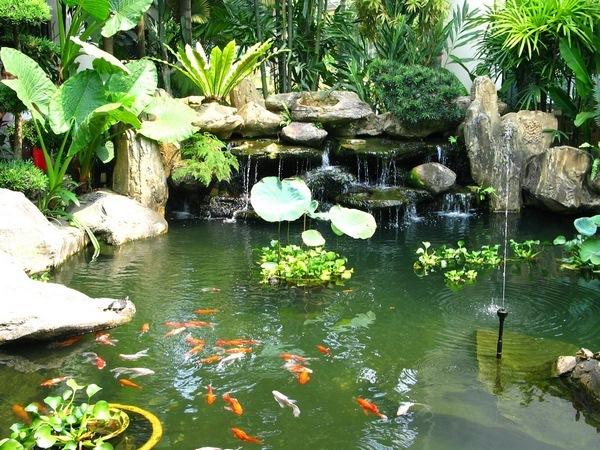 Thiết kế bể cá ngoài trời đẹp tạo cảnh quan cho sân vườn